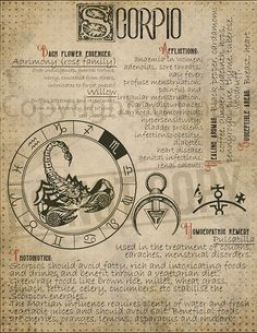 7 pages set about SCORPIO Astrological Sign Correspondences. They are an ideal addition to your own Wicca Book of Shadows. Scorpio Zodiac Facts, Astrology Zodiac, Horoscope, Scorpio Traits, Scorpio Quotes, Astrological Sign, Witch Spell, Zodiac Star Signs, Practical Magic