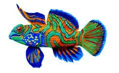 Mandarinfish by  Prentice Studio Color Pencil ~ 5 x 7