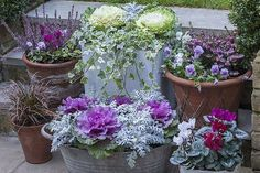 garden for winter. Make it magical Planting ornamental cabbage and other cool season plants is just around the corner.Planting ornamental cabbage and other cool season plants is just around the corner. Winter Container Gardening, Container Plants, Container Design, Fall Planters, Garden Planters, Garden Beds, Garden Ideas Canada, Ornamental Cabbage, Fall Containers