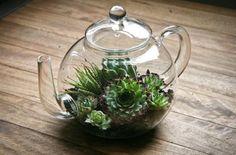 Um bule dá forma a este recipiente, que possui várias espécies de plantas.