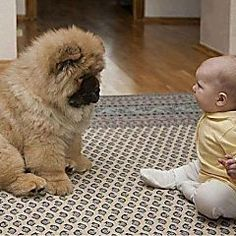 Trendy Funny Dogs With Captions Puppies 37 Ideas funny captions funny humor funny memes animal funny Funny Dog Captions, Funny Animals With Captions, Funny Baby Memes, Funny Dog Photos, Funny Baby Pictures, Funny Animal Quotes, Animal Jokes, Cute Funny Animals, Funny Kids