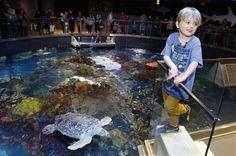 Un niño de Massachusetts renuncia a regalos por las tortugas - http://a.tunx.co/Hg14S