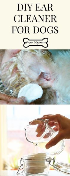 DIY Ear Cleaner For Dogs | Dog Health | Dog Ear Care |