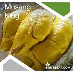 Jual Bibit Durian Super / Musang King / Bawor / Montong / Merah / Duri Hitam BIBIT DURIAN SEGAR - Snack Recipes, Snacks, Chips, Bread, Food, Tapas Food, Appetizer Recipes, Appetizers, Meal