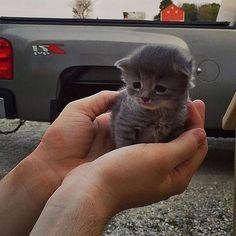 "4,854 Likes, 33 Comments - cats (@clubmycats) on Instagram: ""#ilovemycat #kitty #lovecats #cat #cats #kotomania  #regram  #catstagram #catsofinstagram #gato#"""