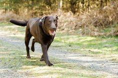 7 señales de que tu mascota puede sufrir artritis