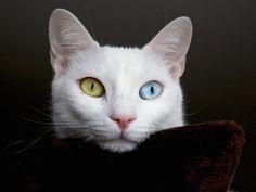 Foto sfondi per desktop - Gatti: http://wallpapic.it/animali/gatti/wallpaper-32025