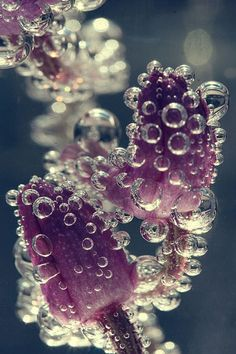 Flowers immersed in water - beautiful macro photography; water bubbles; underwater plants; organic inspirations