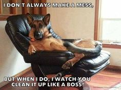 Unless it's a food mess.... then I'll have it cleaned up for you in three seconds flat! #dogs #doglovers #pets