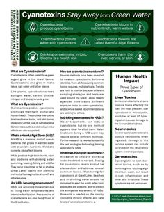 """By Jennifer Boehme, IJC """"Cyanotoxins: Stay Away from Green Water"""" arrives just in time for the start of the Great Lakes beach season. The infographic offers key points and findings from a recent report by IJC's Health Professionals Advisory Board. May 22-28 also is Healthy and Safe Swimming Week, a project of the US Centers … Continue reading """"Beach Read: Cyanotoxins in the Great Lakes"""""""