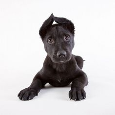 Animal Shelter Dog Portrait - Wall to Watch