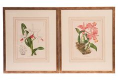 Antique Orchid Engravings, Set of 2  on OneKingsLane.com hand-colored 1820  French engravings of cattleyas w/gold leaf frames, 20L x 1.5D x 24H $737/1185
