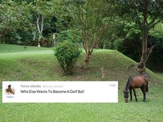 Real-Life Horse Ebooks: Who Else Wants To Become A Golf Ball