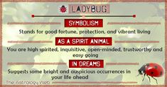 What Does a Ladybug Symbolize A ladybug (or ladybird) is believed to be an embodiment of Lady Luck, bringing good fortune and prosperity along with it. As the insect leads a vibrant and colorful life, it influences you to experience the joys of living to Spirit Animal Totem, Animal Spirit Guides, Animal Totems, Ladybug Meaning, Animal Meanings, Animal Symbolism, Ladybug Face Paint, Lady Bug Painted Rocks, Spirituality