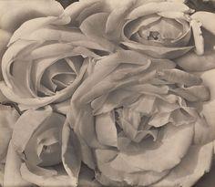 Tina Modotti - Roses. 1924