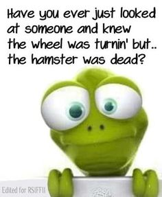 Funny Hamster Wheel Quote | Funny Joke Pictures