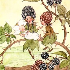 How sweet.  Reminds me of blackberry picking we did last Sunday, with the flowers, pink and purple berries all in clusters.