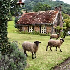 There are a million ways to make your home more eco-friendly and sustainable. - There are a million ways to make your home more eco-friendly and sustainable. It all starts with th - Country Farm, Country Life, Country Living, Sheep Art, Sheep And Lamb, The Good Shepherd, Down On The Farm, Jolie Photo, English Countryside