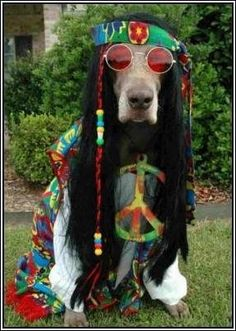 Groovy dog.