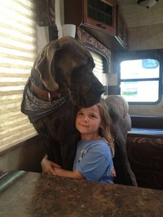 Sweet...#great #dane with #kid