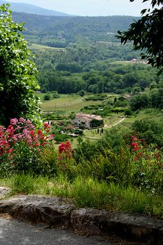 Luberon , #France,,,,Pretty   Country  soud   in  my  France ,,,,very   green  y  flowers **+