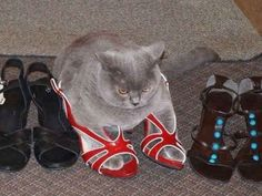 And this cat who knows exactly how you feel in high heels.