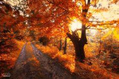 Os bosques outonais oníricos de um fotógrafo tcheco 15