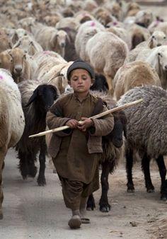 A young Pakistani shepherd escorts his herd in suburbs of Islamabad, Pakistan (AP Photo/B.K. Bangash)