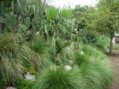 alberto kalach y tonatiuh martínez  / jardín botánico de biblioteca pública, méxico df