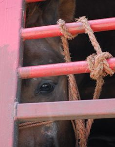 The Intl Fund for Horses joins World Horse Welfare in its call to end the long-distance transportation of horses to slaughter in the European Union - to use their hides FOR FASHION. Photo WHW. HELP PUT A STOP TO DON'T ASK - DON'T TELL &. SPREAD THE WORD.