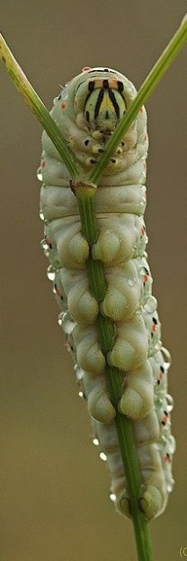 A Caterpillar close-up