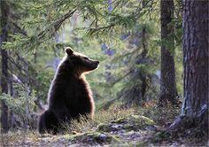 Photo by Valtteri Mulkahainen Finland.