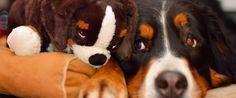 My Weird Biz: Creating Stuffed Animal Clones of Your Pets | NFIB