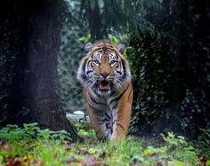 Zoo welcomes fabulous Fabi