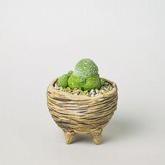 Scratch Thin Horizontal Line Pot S + プセウドリトス・クビフォルメ [ジャバ フォーム] | 多肉植物・特別な鉢の販売 | トーキー | TOKY