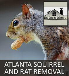 Atlanta Squirrel And Rat Removal