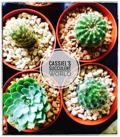 Succulent and Cactus Plants for Sale in Cebu! Visit our FB Page now or contact 09421869629 for your orders. Cactus Plants For Sale, Cacti And Succulents, Cebu, Amazing, Cebu City, Men's Fitness Tips
