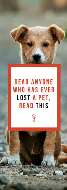 death of a pet, death of a pet children, dealing with the death of a pet, grief kit for kids Dog Death Quotes, Dog Loss Quotes, Pet Quotes Dog, Animal Quotes, Dog Grief, Pet Loss Grief, Loss Of Dog, Losing A Dog Quotes, Losing A Pet