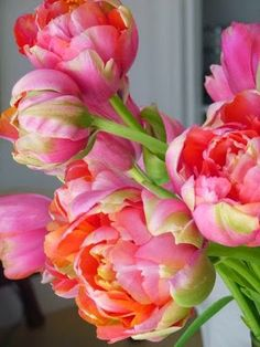 Another pinned said: Double Petaled Tulips can be so beautiful, and resemble peonies. I love how full they are, and how the colour emerges as they go from bud to complete bloom. My Flower, Fresh Flowers, Beautiful Flowers, Cactus Flower, Exotic Flowers, Purple Flowers, Peony Flower, Beautiful Gorgeous, Colorful Roses