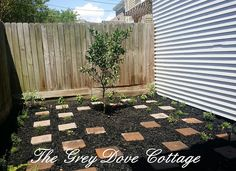 Herb garden; square pavers create a checker board pattern where herbs may be planted in between.  Meyer lemon tree is planted at the center of the garden.