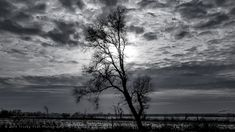 Austère et Rigide by Tricky Fish Photography 2019 #NaturePhotoDay #NaturePhotographyDay #desolation #tree #winter #localnature Clouds, Fish, Celestial, Sunset, Photography, Outdoor, Outdoors, Photograph, Pisces