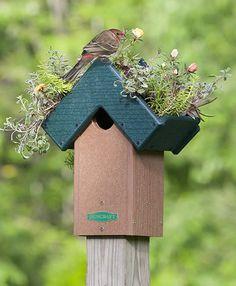 Duncraft.com: Rooftop Fly-Thru Bird House