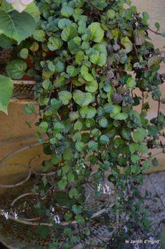 jardin,à l'étage,Joel dans bucher 011-001.JPG