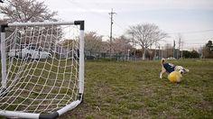 Futbol aşığı köpek
