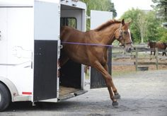 Horsemanship: Solving Trailer Problems, Part 1 Horses want to rush out of the horse trailer because they become overly emotional about being inside.