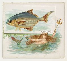 Pampano, from Fish from American Waters series (N39) for Allen & Ginter Cigarettes