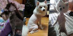 20 perros FORZADOS a vivir con el corte de pelo más horrible del mundo.