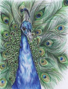Peacock Drawn with colour biro Pens / Animal Artwork / Bird Art Work / Peacock Feather / Giclee Art Print / Wildlife Biro Art, Biro Drawing, Pen Art, Peacock Drawing With Colour, Colour Drawing, Animal Drawings, Art Drawings, Peacock Wall Art, Natural Form Art
