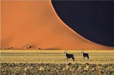 Oryx, Sossusvlei, Namibia.©Jonathan Jagot