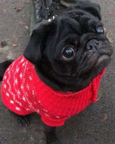 When the Xmas jumpers tight, you know you're winter bod ready #preppedthroughsummer #pug